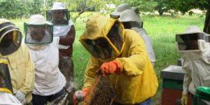 Aiuti all'apicoltura per le perdite di produzione dovute alle avversità atmosferiche verificatesi nella primavera del 2019